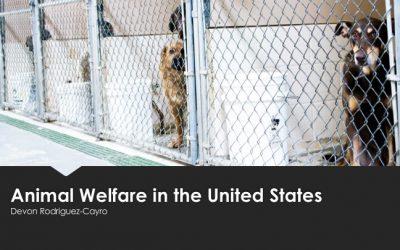Devon Rodriguez-Cayro : Animal Welfare in the United States