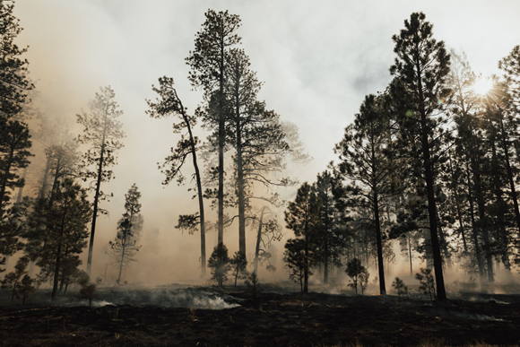 Katherine Haines: Flame Game: A Podcast About Controlled Burns, Episode 4